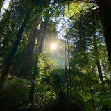 Vær med til at bevare regnskoven